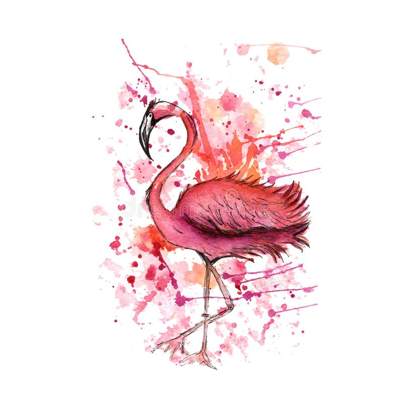Pink flamingo, watercolor splashes, colorful paint drops. Beautiful vector illustration isolated on white background.Tropical bird stock illustration