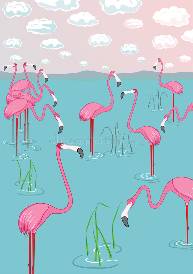 Pink Flamingos On The Bay Royalty Free Stock Images