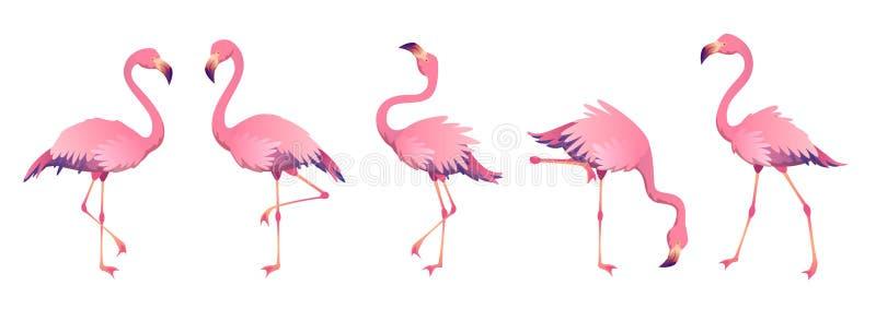 Pink flamingos. Cute flamingo animal exotic nature wild fauna zoo bird beak plumage legs tropical african beach art vector illustration