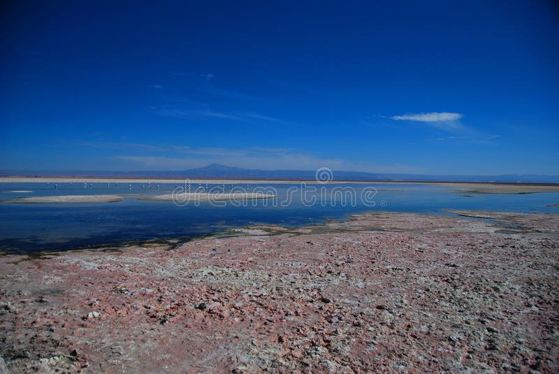Pink flamingos in the desert royalty free stock photography