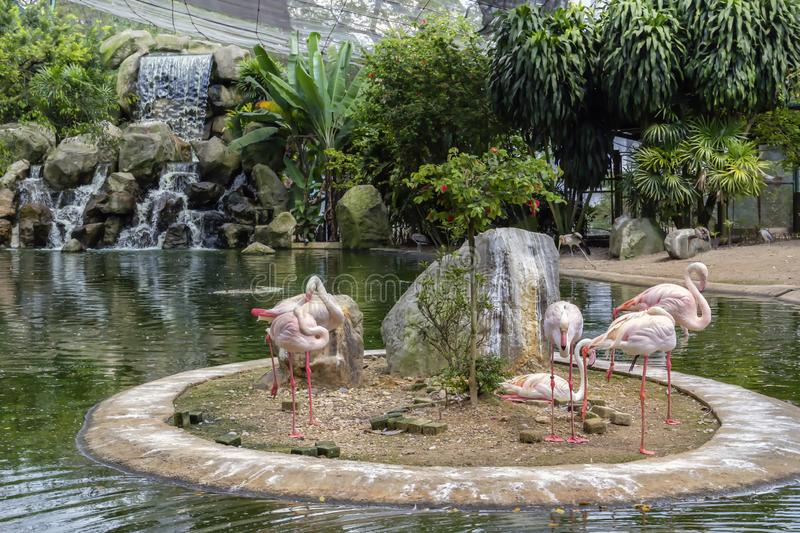 Pink flamingos on the lake with a waterfall in Kuala Lumpur bird park royalty free stock photography