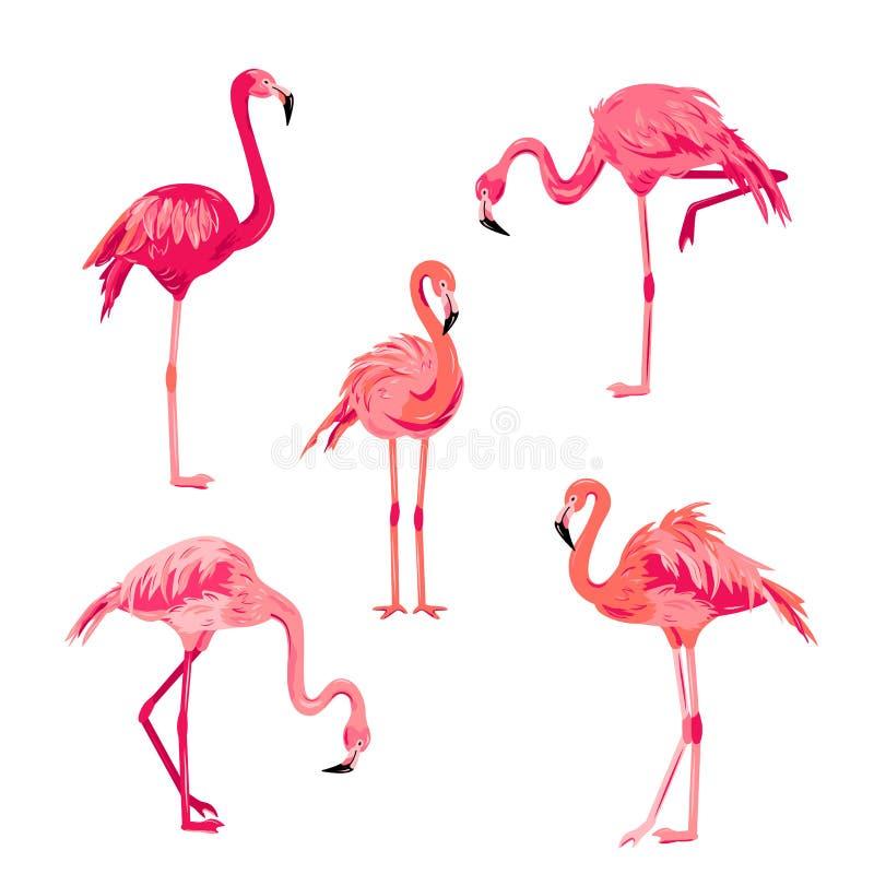 Pink flamingos set vector illustrazione illustrazione vettoriale