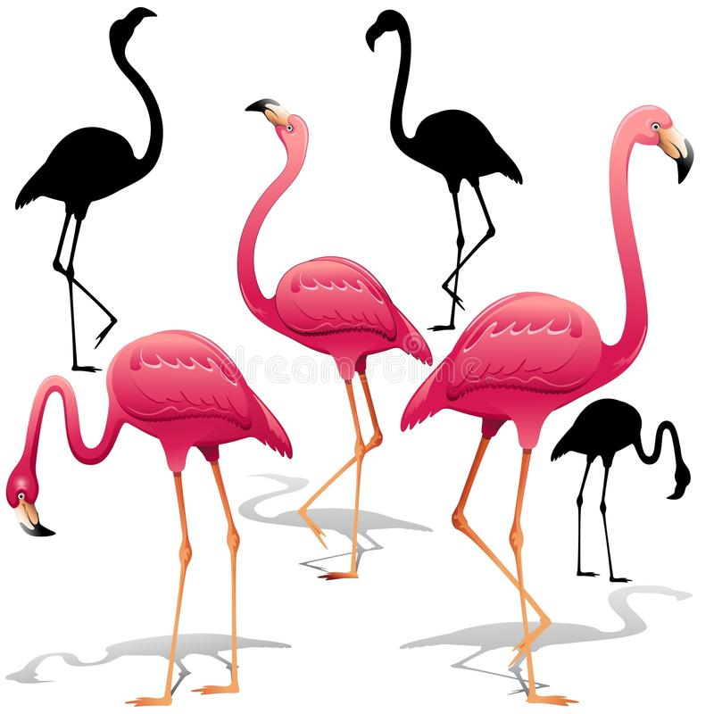 Download Pink Flamingos Vector Illustration. Isolated Decorative Design Elements. Exotic Bird. Flamingo Shapes. Stock Vector - Illustration of copyright, beak: 72002079