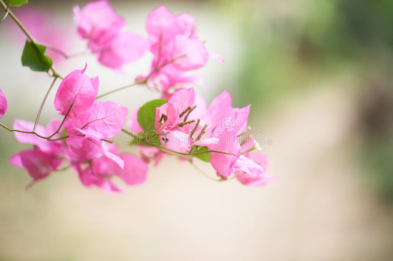 Pink floral background for your design stock photo