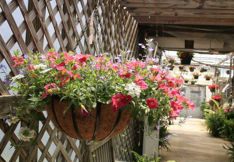 Pink Floral Hanging Basket. Floral hanging basket in breezeway. Pink petunias, white verbena stock photos