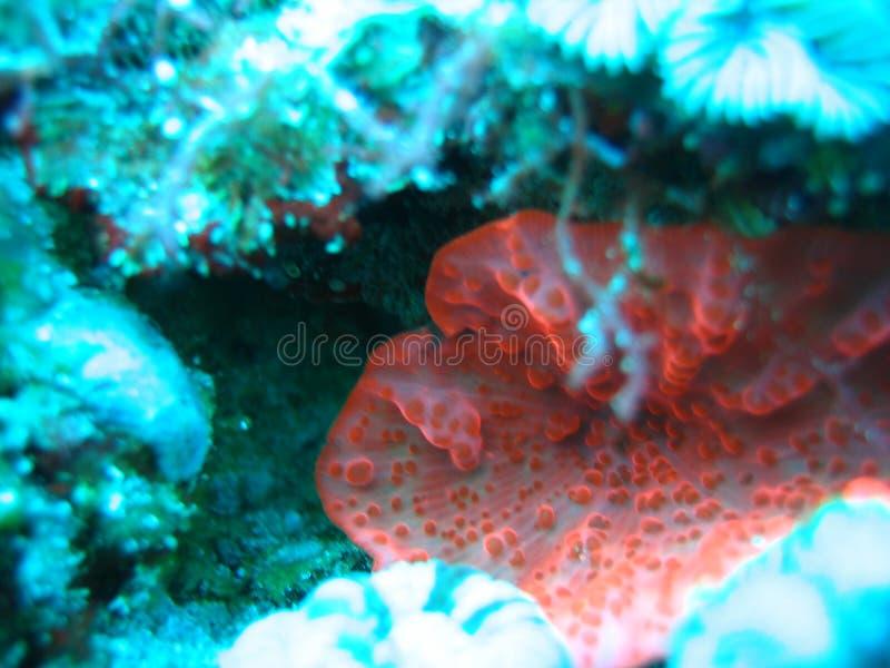 Download Pink floroscent stock image. Image of ocean, fish, love - 1297137