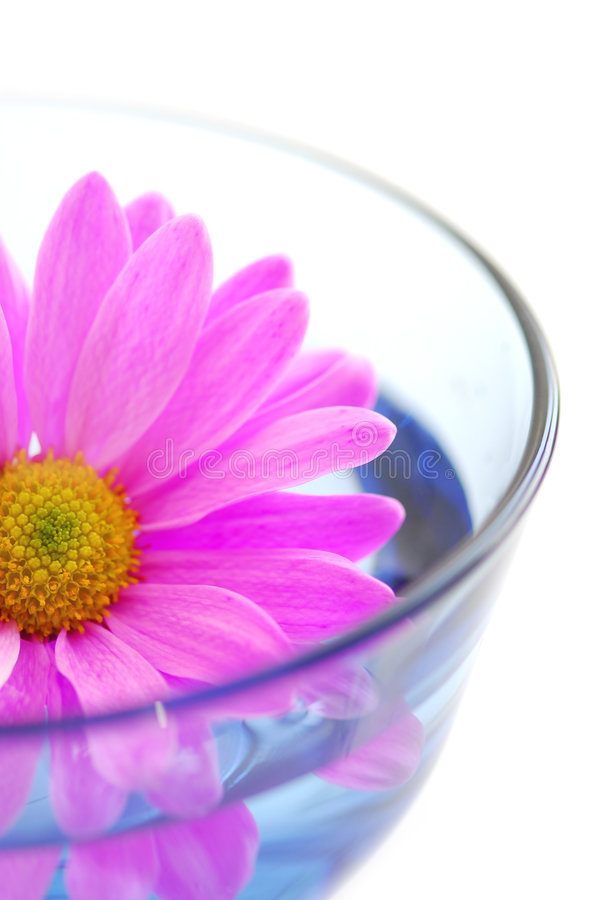 Pink flower royalty free stock photos