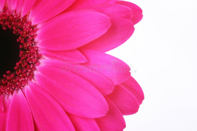Download Pink flower stock photo. Image of power, color, decoration - 3833214