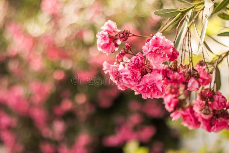 Pink Flower Free Public Domain Cc0 Image