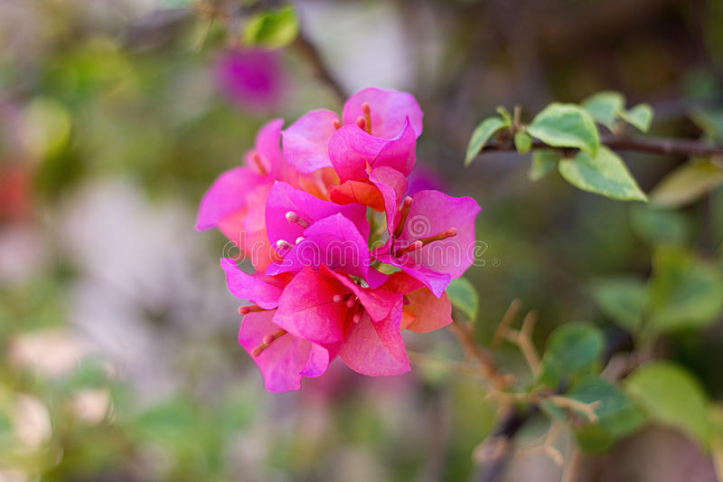 Pink flower background stock photo