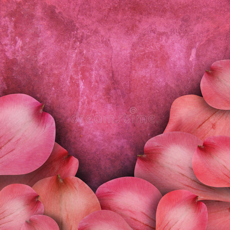 Pink Flower Background With Copyspace Royalty Free Stock Photography