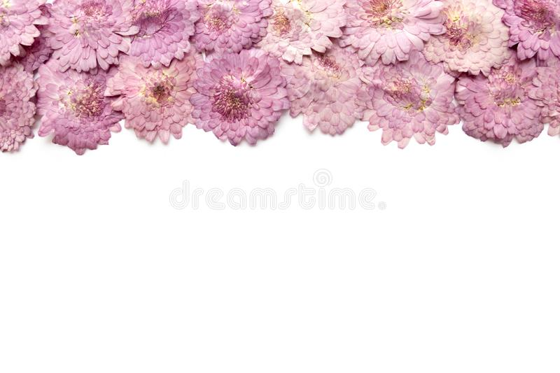 Pink flower background isolated on white. Abstract blooming flow. Ers royalty free stock photo