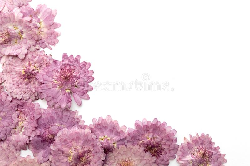 Pink flower background isolated on white. Abstract blooming flow. Ers stock images