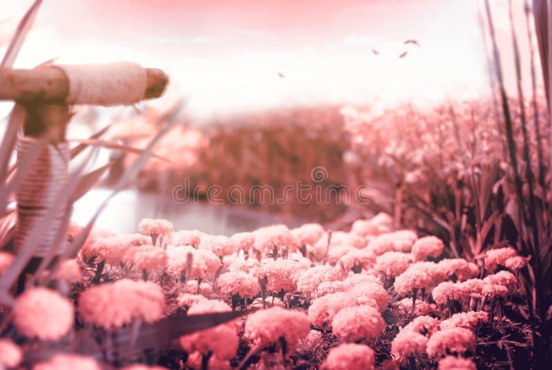 Pink flower background. Romantic of pink nature landscape. Flower stock image