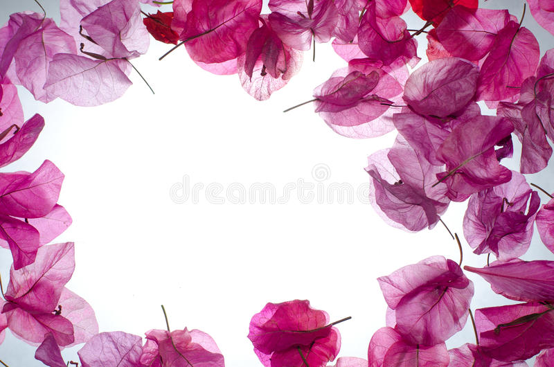 Pink flower border stock image image of blooming mixed 21903371 pink flower border mightylinksfo Images