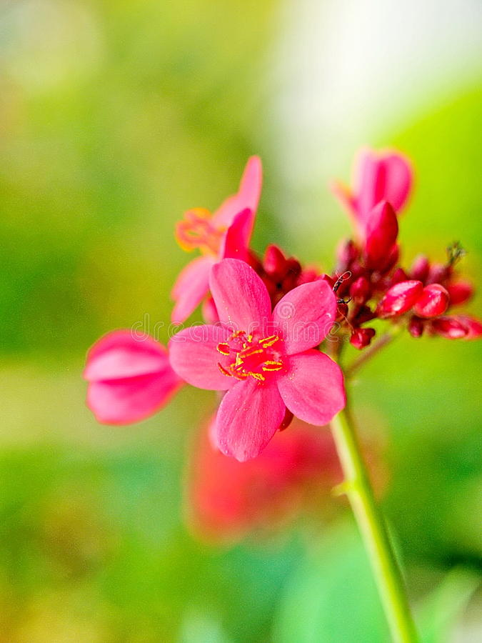 Pink flower in botanic. Or park and outdoor, don't know flower name but is beautiful and soft royalty free stock photos