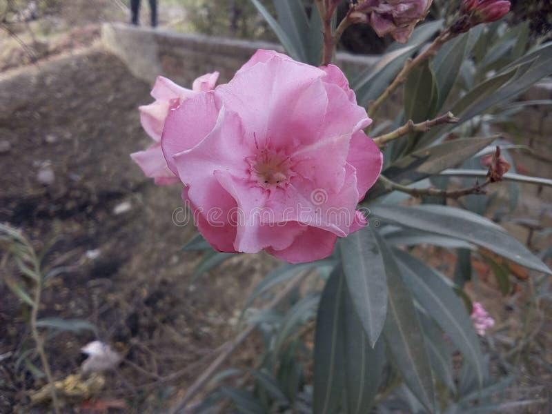 Beautiful flower Blooming stock image