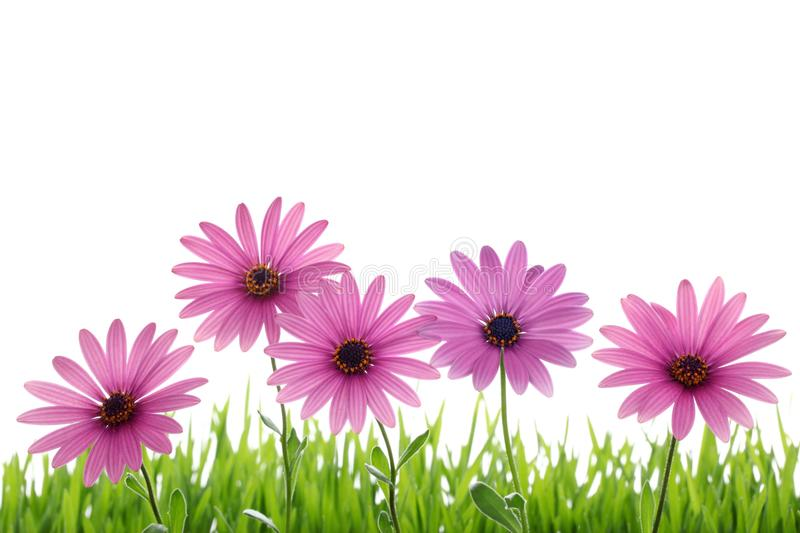Download Pink Flower In Grass Stock Photography - Image: 18960122