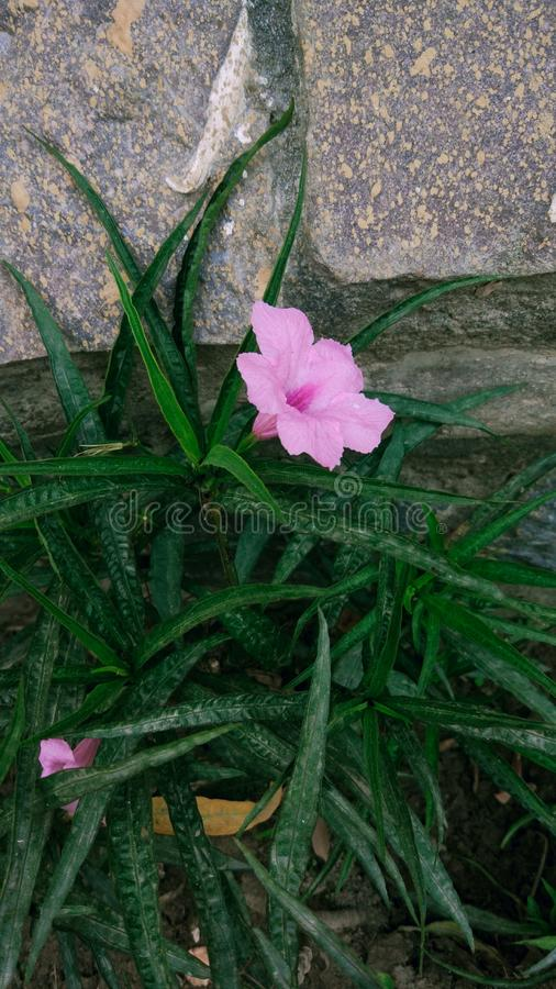 Pink Flower in grass. Stone, green, nature, beauty, plant stock photo