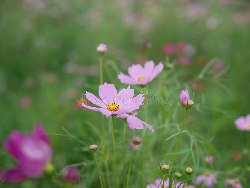 Pink flower and green leaf. Field, nature stock photography
