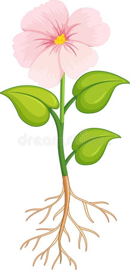 Flower Roots Stock Illustrations – 2,153 Flower Roots ...