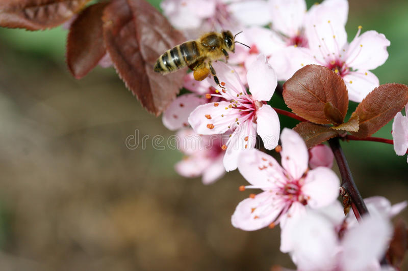 Pink flower. An insect sucks nectar from a pink colored flower stock photo