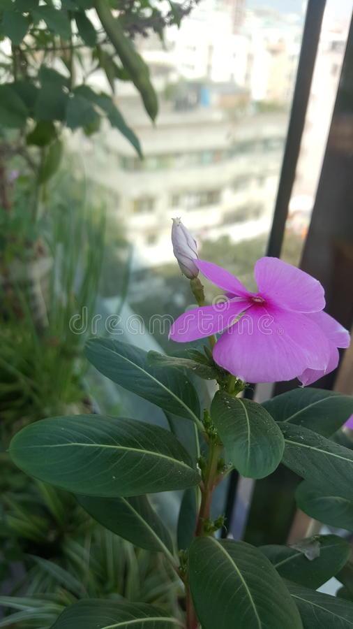The pink flower stock image