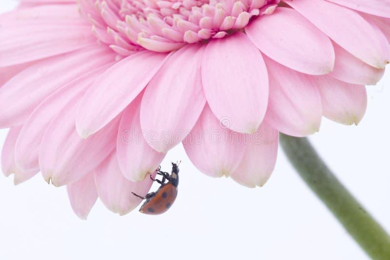 pink flower nonviolence ribbon