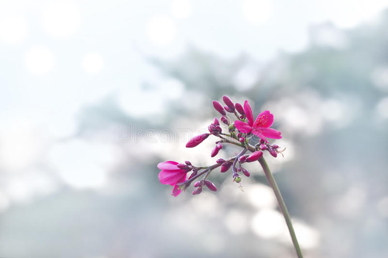 Pink flower on pastel background, soft and blur concept royalty free stock photography