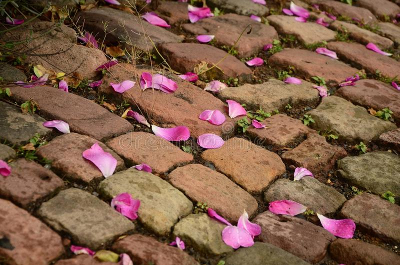 Pink Flower Petals on Brown Brick Way stock photography
