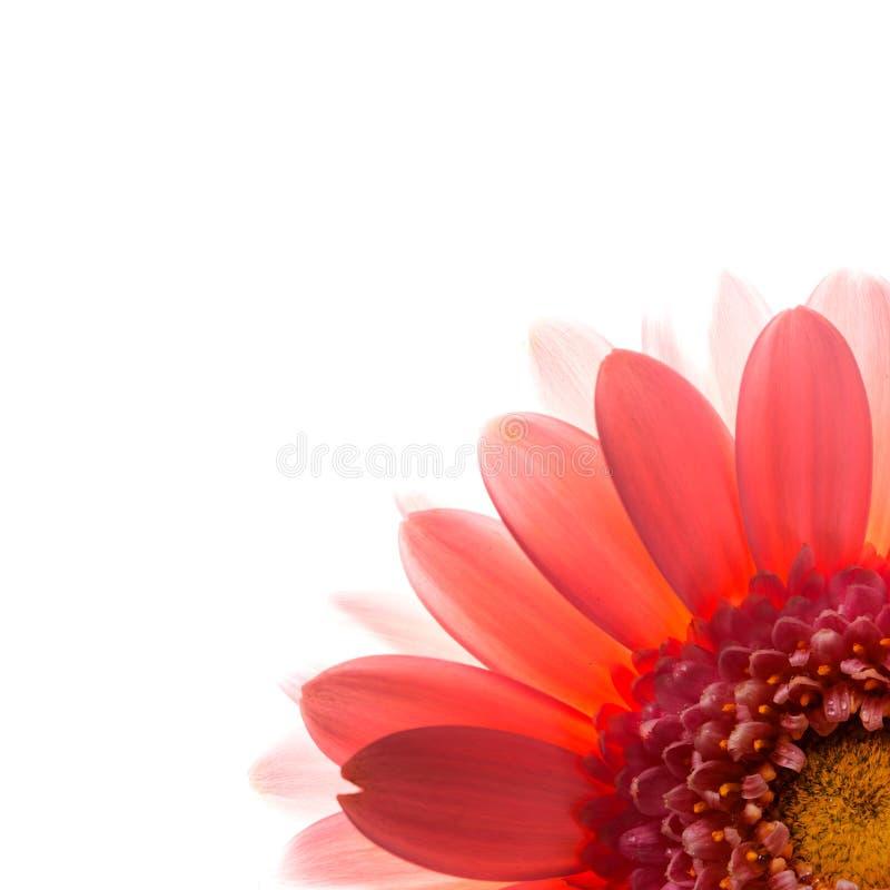 Pink flower petals. stock photography