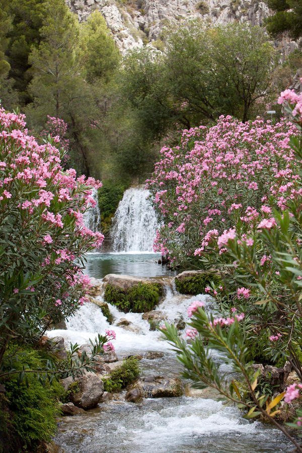 Pink Flower Plants and Trees at the Water Falls royalty free stock photos