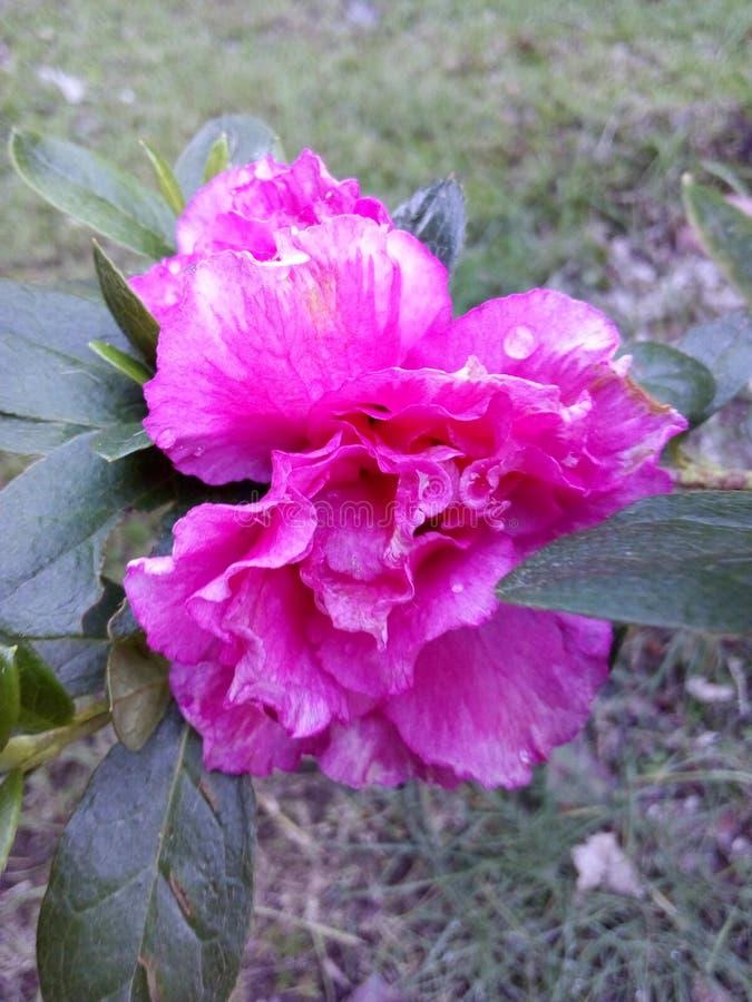Wavey Petals royalty free stock photos