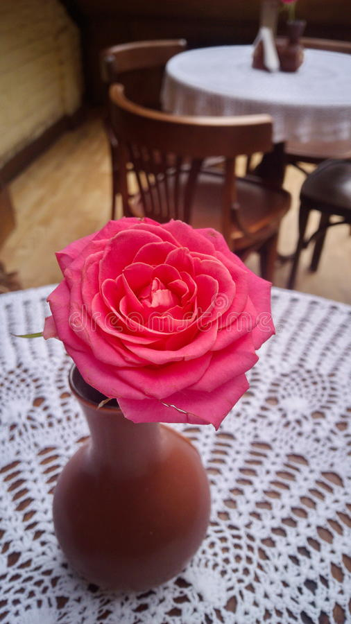 Pink Flower at restaurant table. Pink Rose at restaurant table stock images