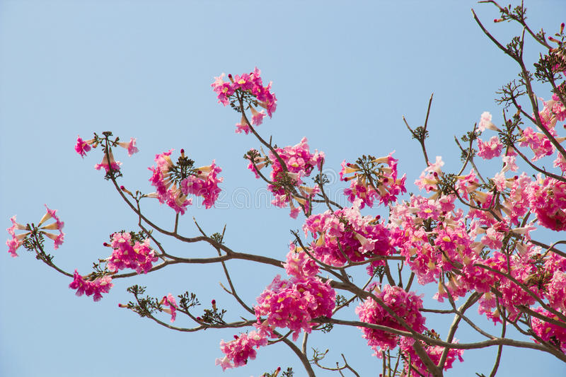 Download Pink Flower stock photo. Image of plant, leaf, decorate - 39509948