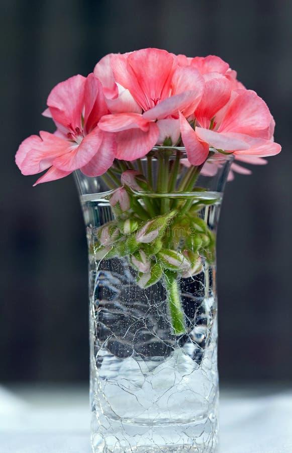 Download Pink Flower in Vase stock photo. Image of blossom, flowering - 22331198