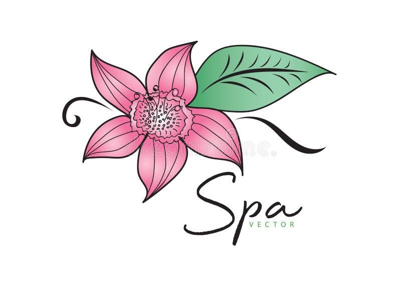Pink Flower vector illustration. logo design. green leaf icon, Element for beauty and spa stock illustration