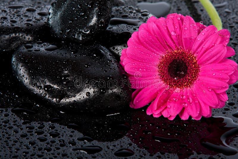 Download Pink flower on wet surface stock image. Image of petal - 22628975