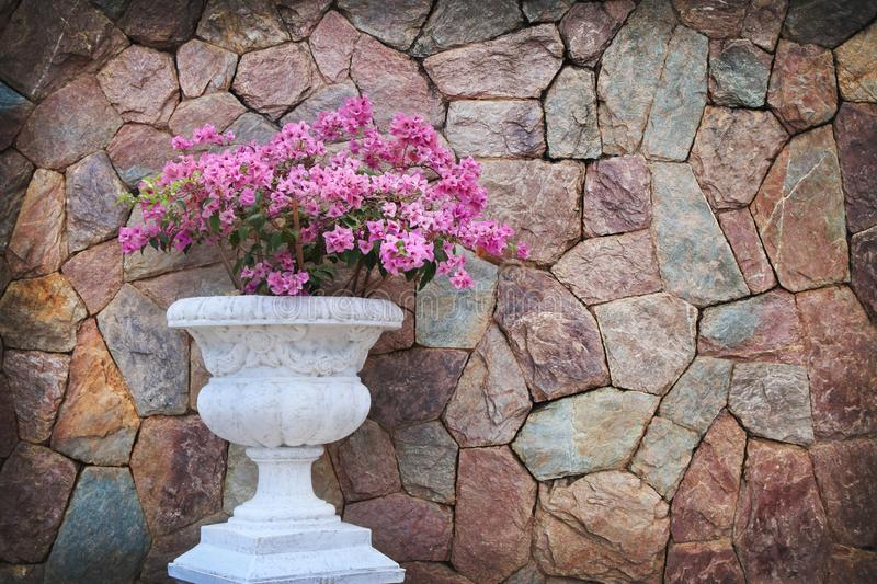 Pink flower in white flowerpot with stone wall background royalty free stock photos