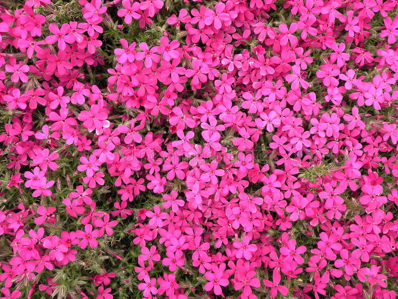 Download Pink flowers stock image. Image of backgound, flowers - 13441727