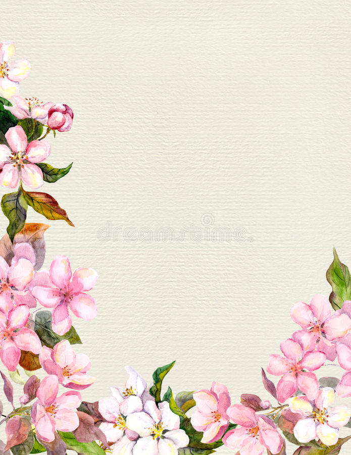 Pink flowers - apple, cherry blossom. Floral frame. Vintage watercolor on paper background vector illustration
