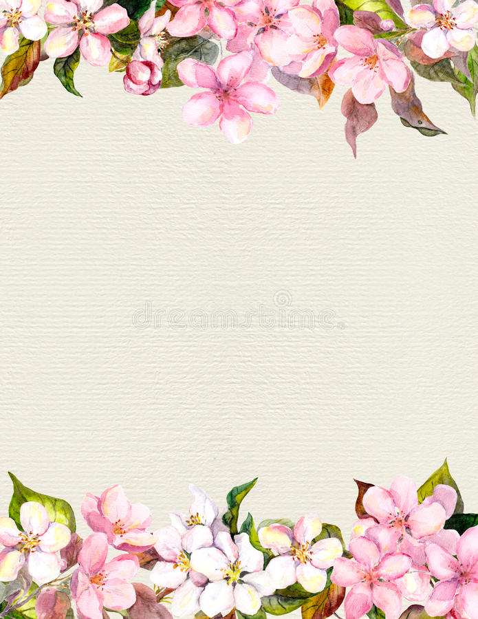 Pink flowers - apple, cherry blossom. Floral frame. Watercolour on paper. Pink flowers - apple, cherry blossom. Floral frame for romantic background. Watercolour royalty free stock image