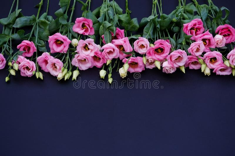 Pink flowers on black background. Pink and white flowers on black background with green leaves stock images