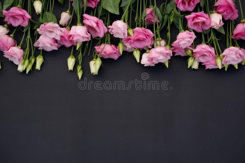 Pink flowers on black background. Pink and white flowers on black background with green leaves royalty free stock photography