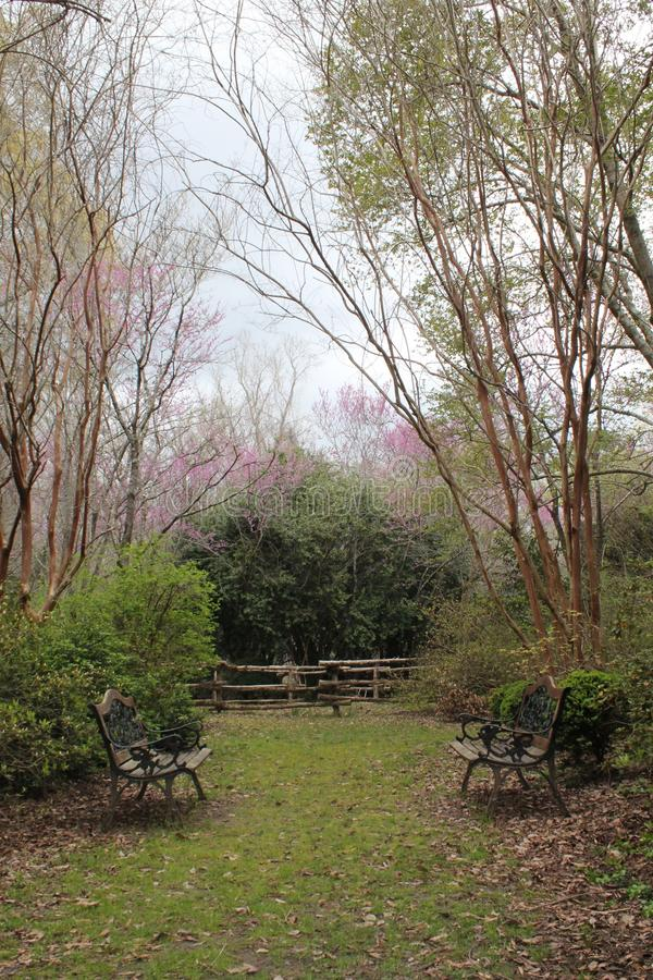 Pink flowers blooming on green trees in backyard courtyard of southern plantation royalty free stock photography
