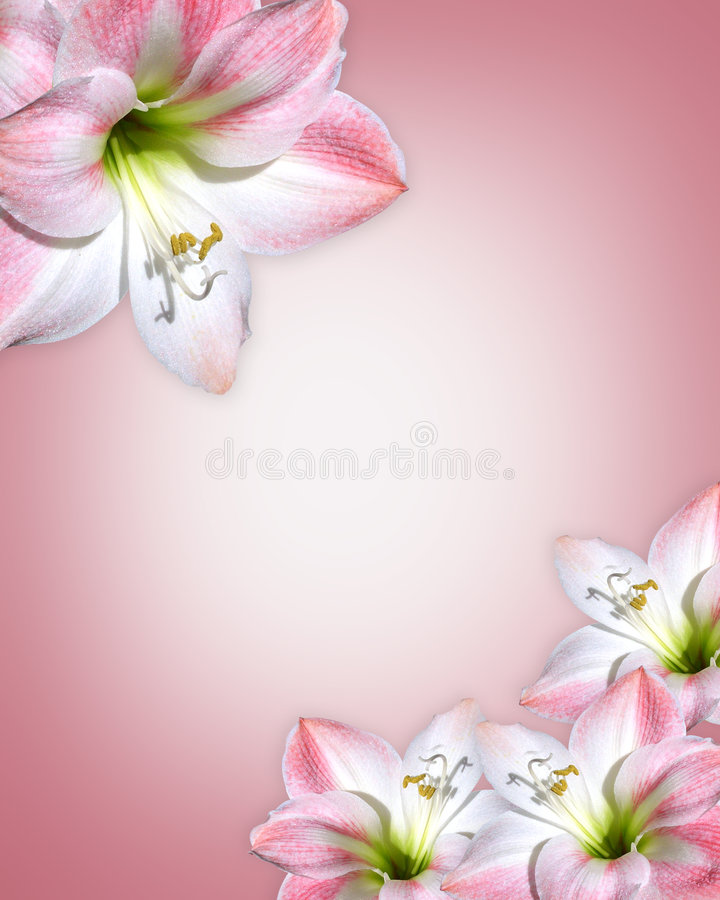 Free Pink Flowers Border Amaryllis Royalty Free Stock Photos - 7806628