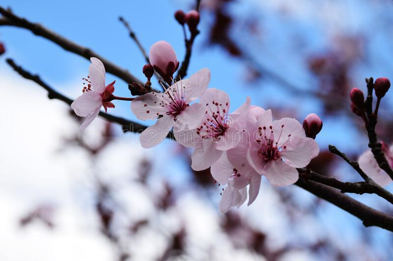 Pink Flowers On Branch Free Public Domain Cc0 Image