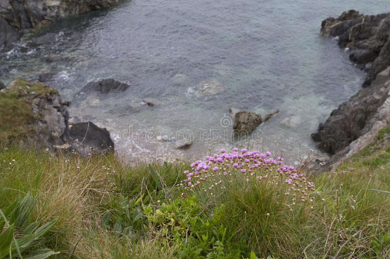Pink flowers at the cliff edge. Clear water in the bay with a mixture of grasses royalty free stock images