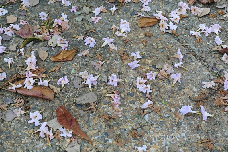Pink flowers and dry leaf fall on the bricks walkway stock images