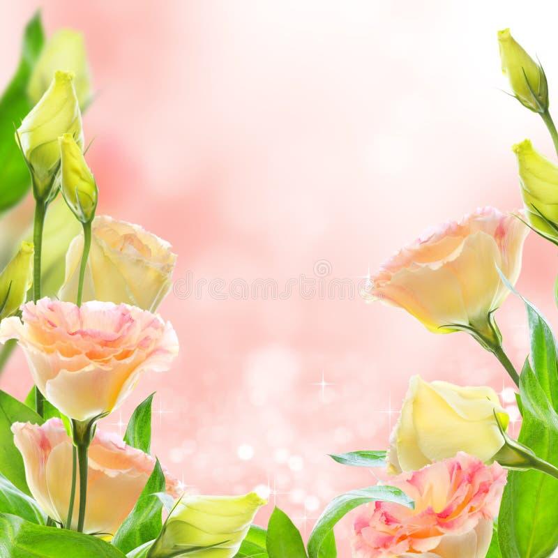 Pink flowers eustoma. Collage. stock photos